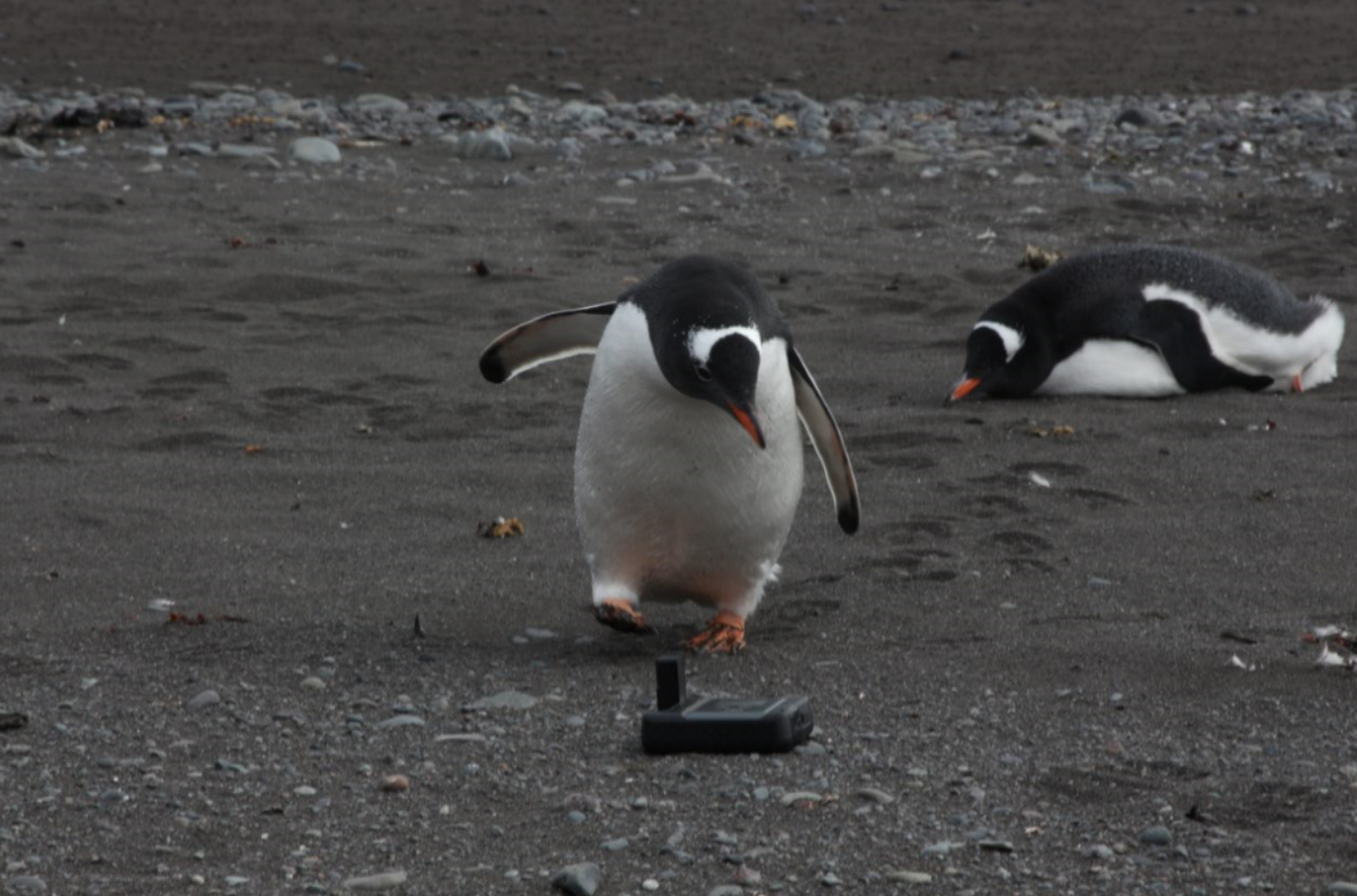 Iridium GO! with a Penguin in Antarctica