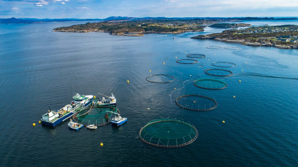 Fisheries & Commercial Fishing